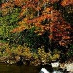 Fall colors along the Linville River above the falls.