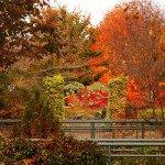 Fall stream garden.