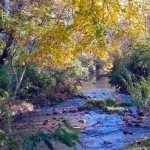 Beautiful Mill Creek runs in front of the museum. Great for trout fishing.