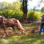Farm Day – A Second Saturday Event.  Credit Mountain Gateway Museum.  Photo by Matthew Provancha