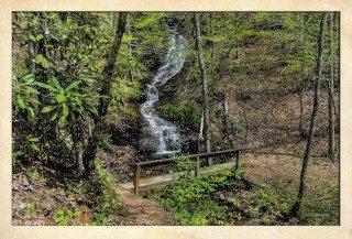 NC Bartram Trail