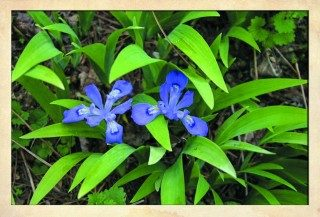 Gardens of the Blue Ridge
