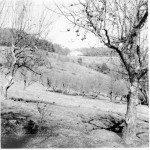 Apple orchard. Historic image courtesy National Park Service.