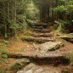 Hiking trail on Mount Mitchell. Photo by Matt Mutel.